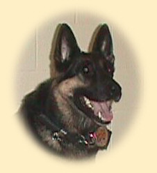 This K9 is Grim. He was retired from service due to an injury in 2007 and passed away in August, 2009. and his handler, Deputy David Worman joined the Noble County Sheriff's Department in December 2004, after having served as a deputy with the LaGrange County Sheriff's Department.